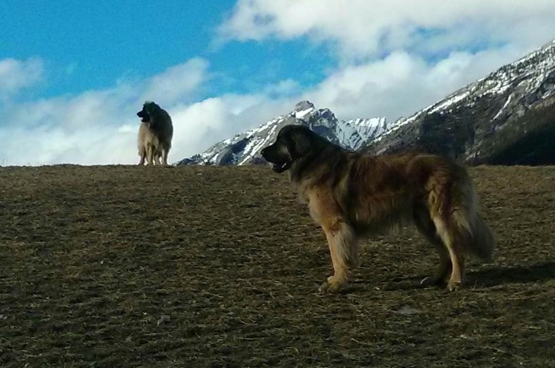 Banff Pet Friendly